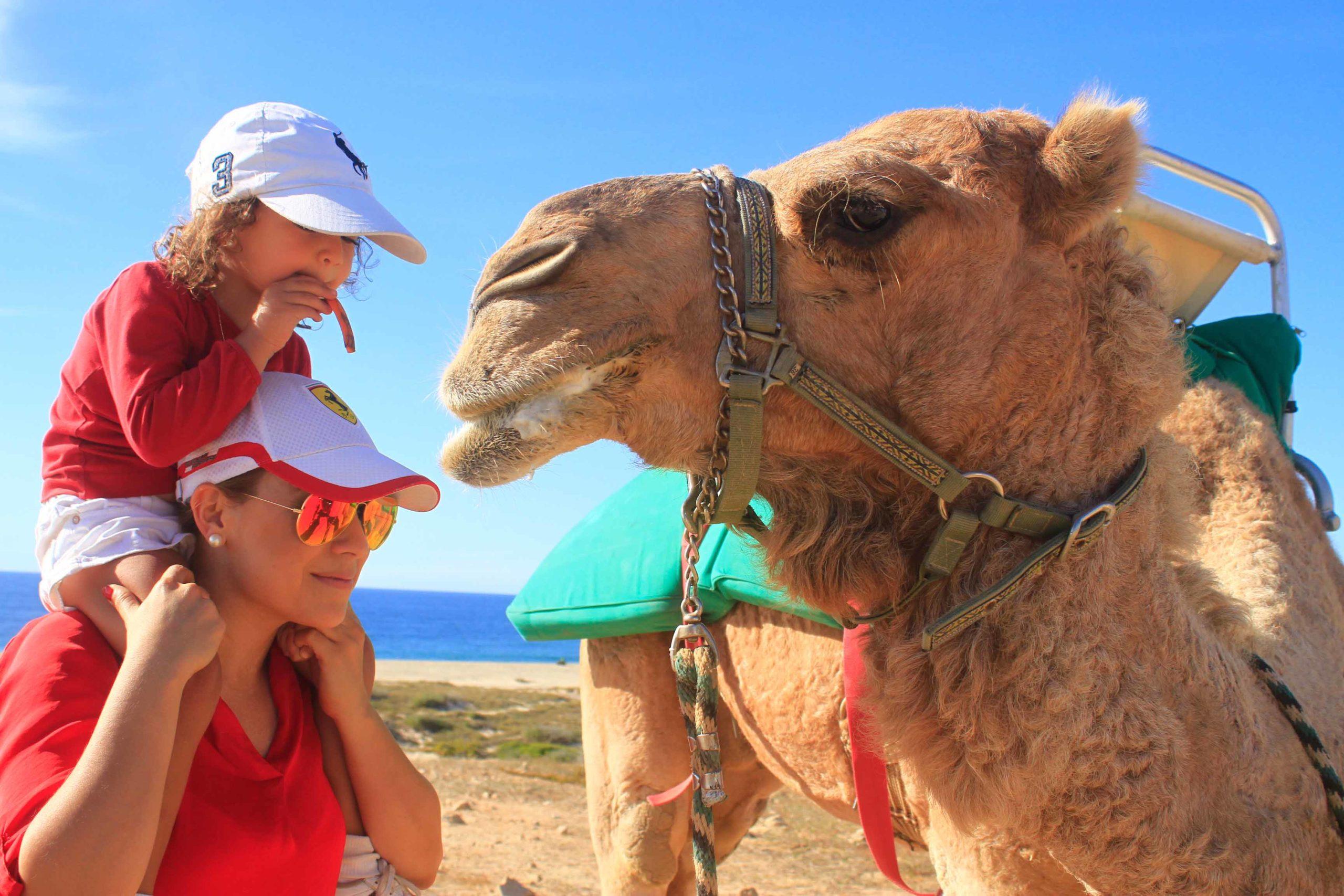 Los Cabos Camel Ride 1
