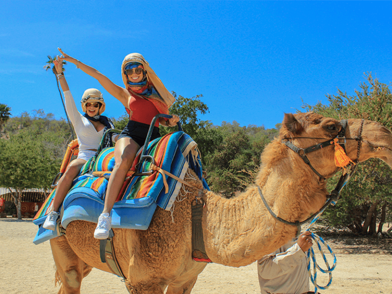 camel quest los cabos by official cabo concierge gallery image 01
