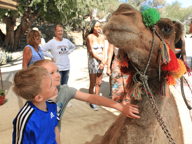 camel quest los cabos by official cabo concierge gallery image 02