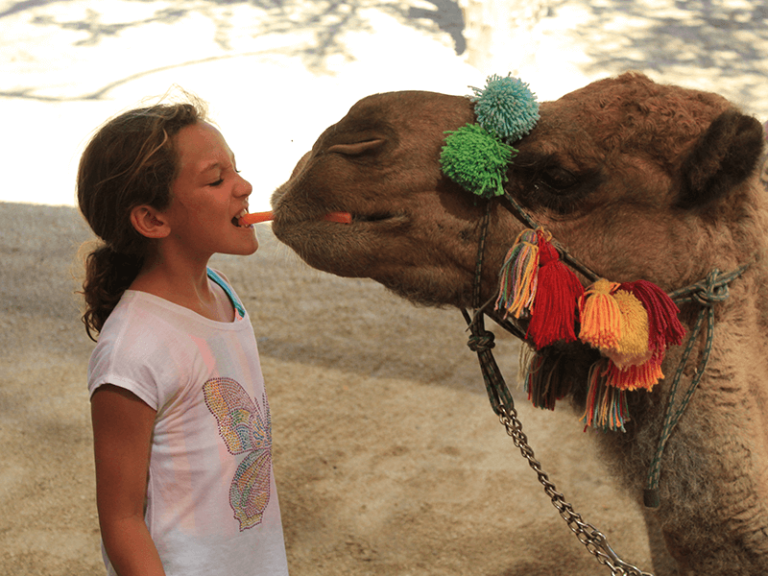 camel quest los cabos by official cabo concierge gallery image 03