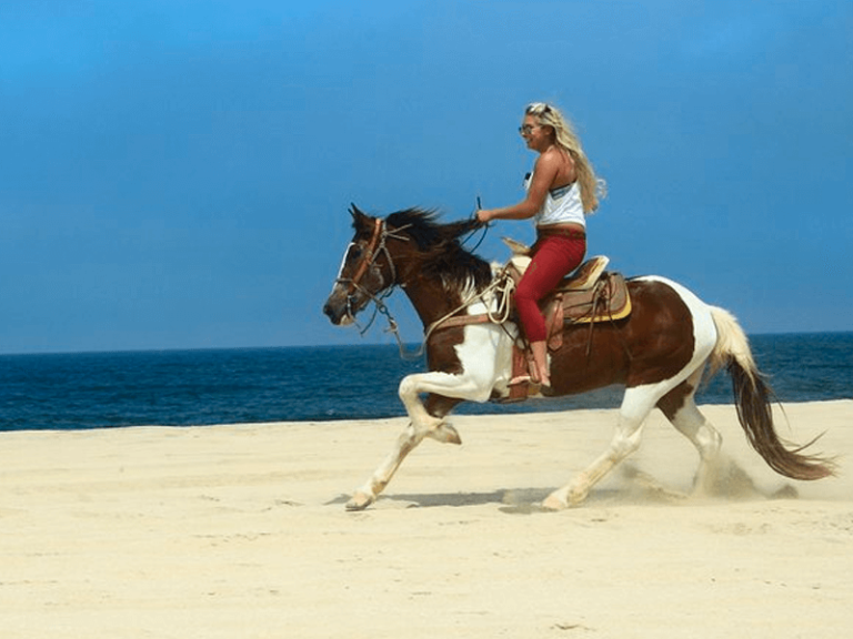 horse beach and desert ride by official cabo concierge gallery image 05